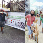World Vision provides goats, pigs for 320 families